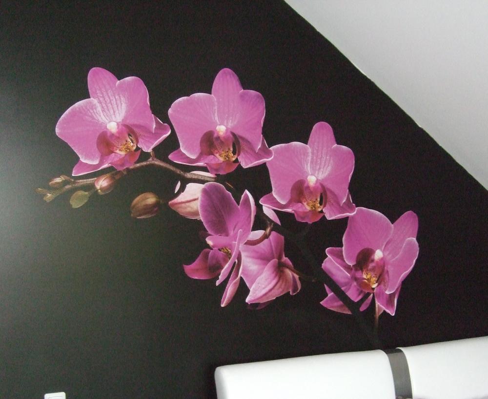 Spauzdintas ir ploteriuotas lipdukas uzklijuotas ant sienos